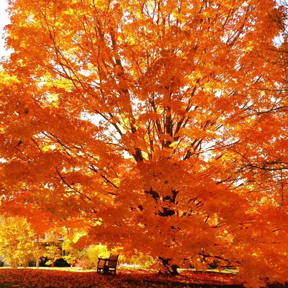 view new york state s weekly fall color report a mapped guide to