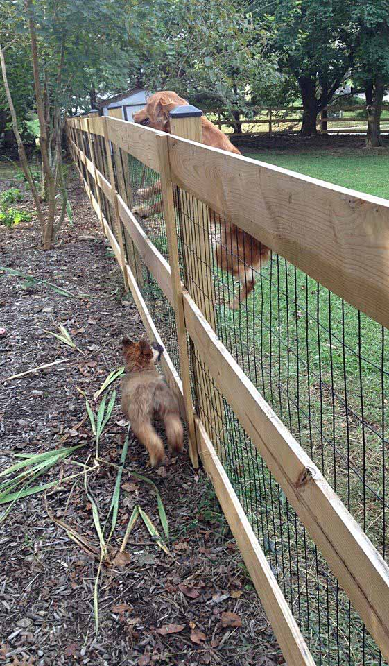 Fence deer and dog proof garden pinterest dogs for Easy dog fence ideas