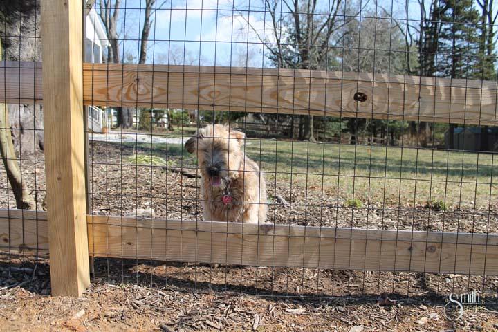 winnie fence