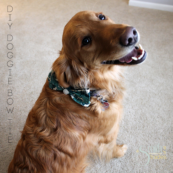 DIY Doggie Bow Tie