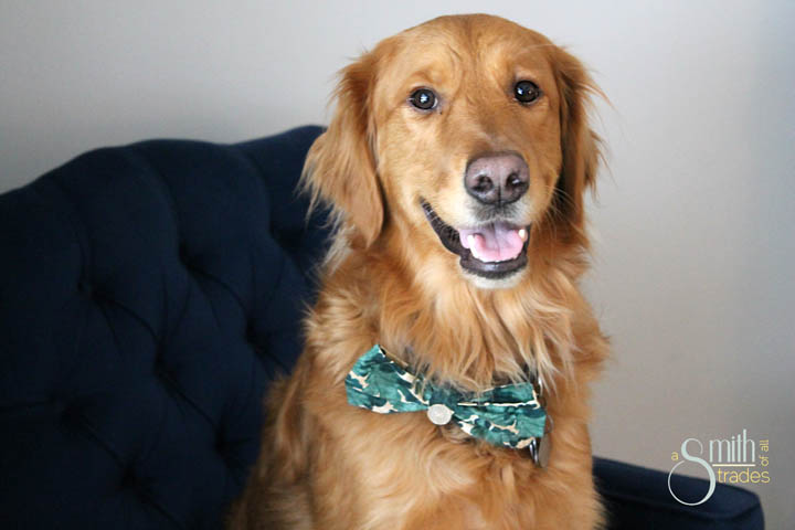 {A Smith of All Trades} Remmy and his bow tie16