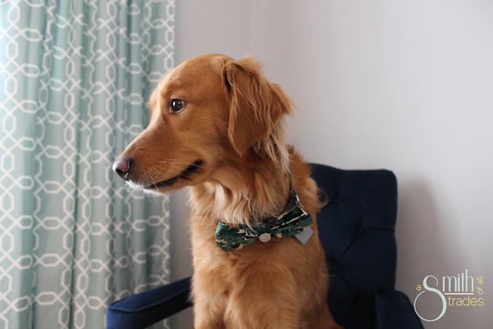 {A Smith of All Trades} Remmy and his bow tie17