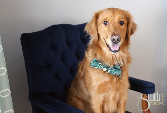 {A Smith of All Trades} Remmy and his bow tie19