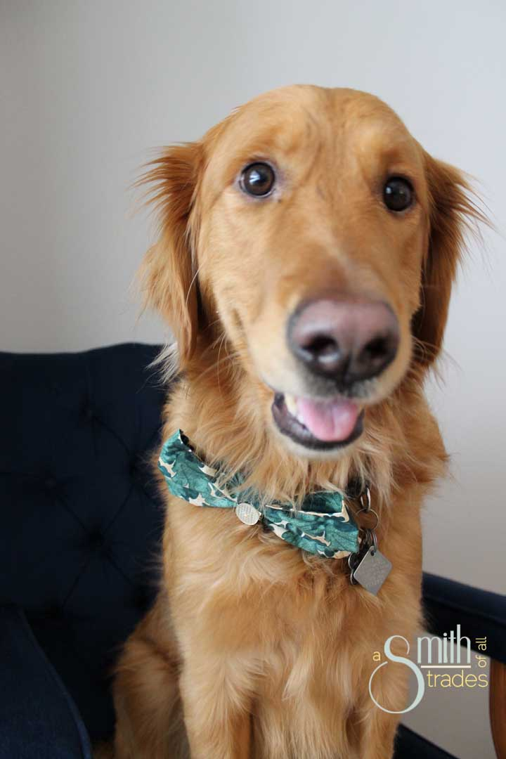 {A Smith of All Trades} Remmy and his bow tie20