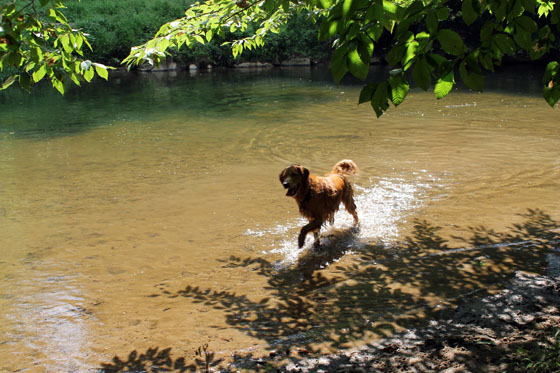 Swimmer dog1