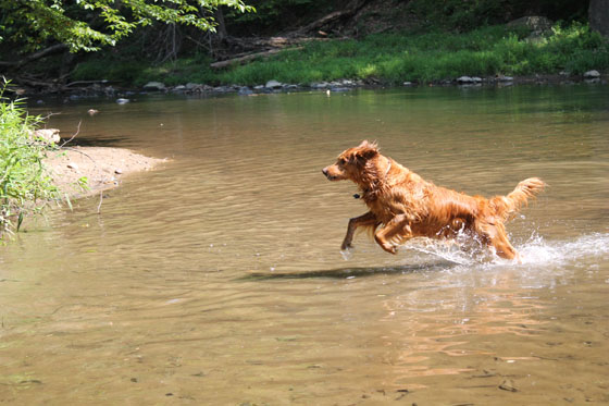 swimmer dog4