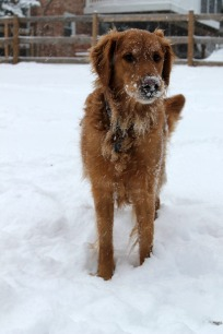 Remmy in Snow