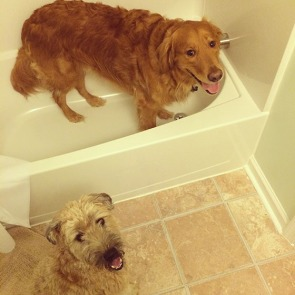 Dogs in tub
