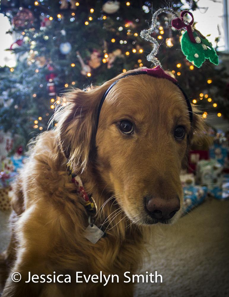 Christmas Dog-2